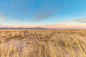 Five Contiguous Lots - A Quiet Oasis at the Edge of Historic Downtown Willcox in Cochise County